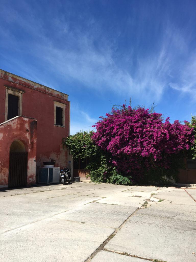 Diary in Cilento