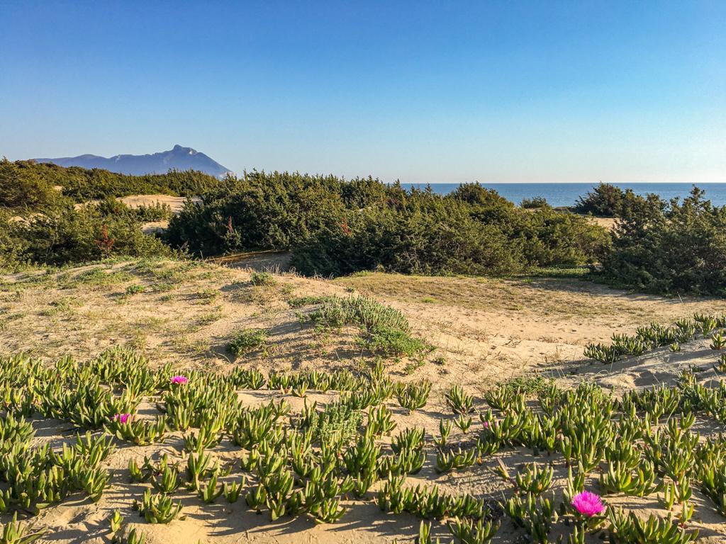 duna sabbiosa con vegetazione e monte Circeo sullo sfondo